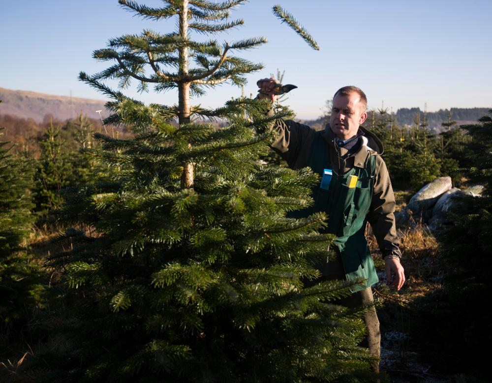 Labelling and Pruning the Christmas Trees